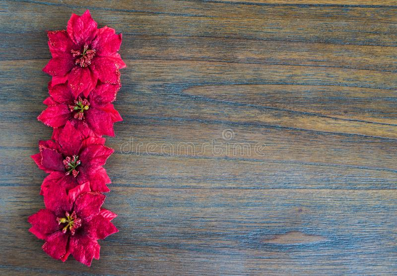 Vertical row of red Christmas flowers royalty free stock photo