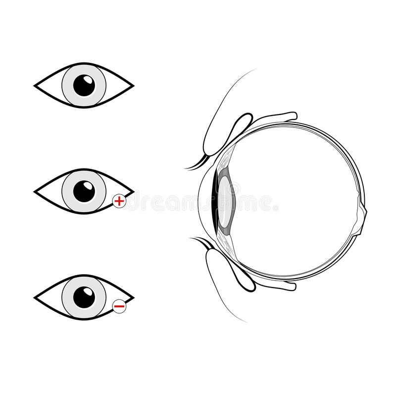 Vertical section of the eye and eyelids. Black and white. Anatomy of the human eye. Vertical section of the eye and eyelids. Schematic diagram. detailed vector illustration