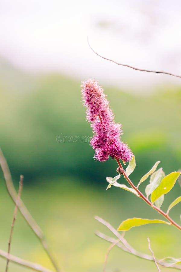 Vertical selective closeup shot of a pink flower with yellow leaves. A vertical selective closeup shot of a pink flower with yellow leaves stock image