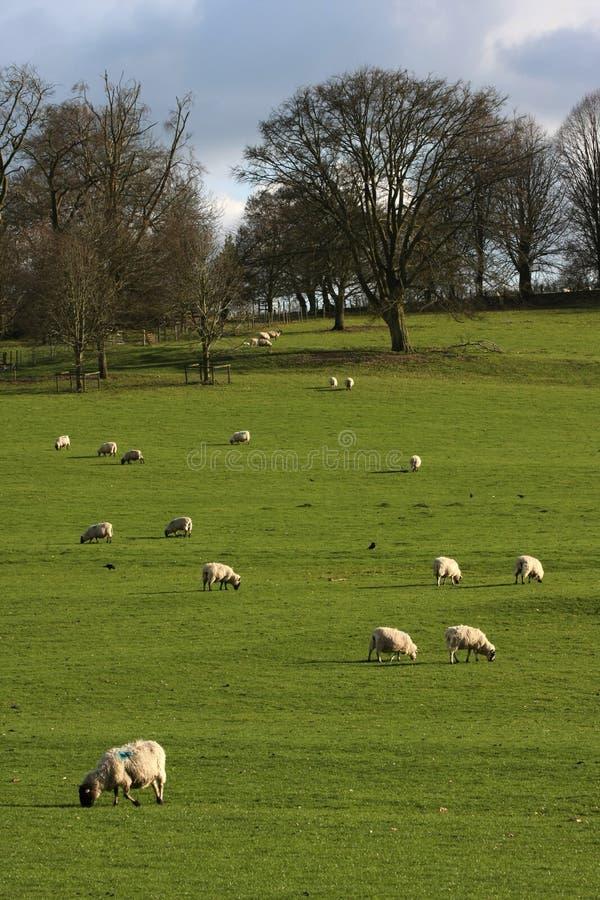 Vertical sheet on farmland