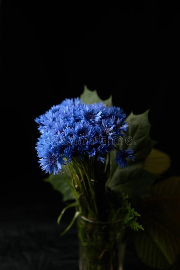 Vertical shot of a beautiful blue petaled hydrangea flower bouquet on a black background. A vertical shot of a beautiful blue petaled hydrangea flower bouquet on stock images