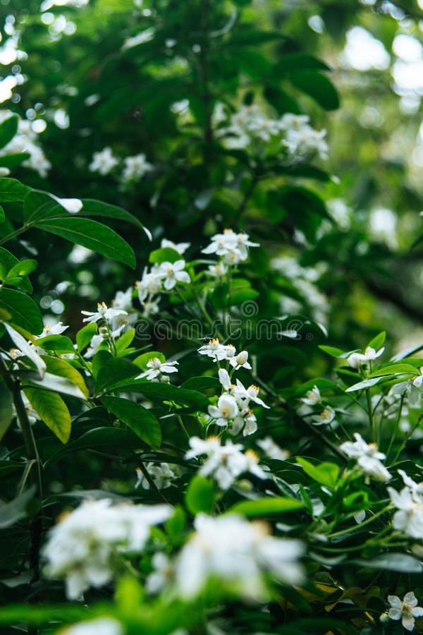 Vertical shot of beautiful greenery and white little flowers on a plant with a blurred background stock images