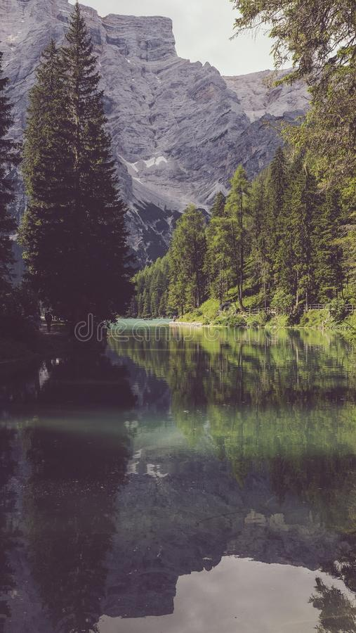 Vertical shot of beautiful high mountains and fir trees near the river during daytime. A vertical shot of beautiful high mountains and fir trees near the river stock image