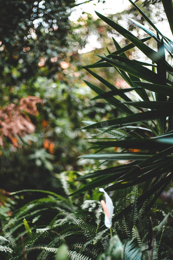 Vertical shot of beautiful spiky green leaves upfront and greenery in the background in a jungle. A vertical shot of beautiful spiky green leaves upfront and royalty free stock images