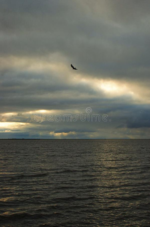 Vertical shot of a bird flying in the cloudy sky above the calm ocean during sunset. A vertical shot of a bird flying in the cloudy sky above the calm ocean royalty free stock image