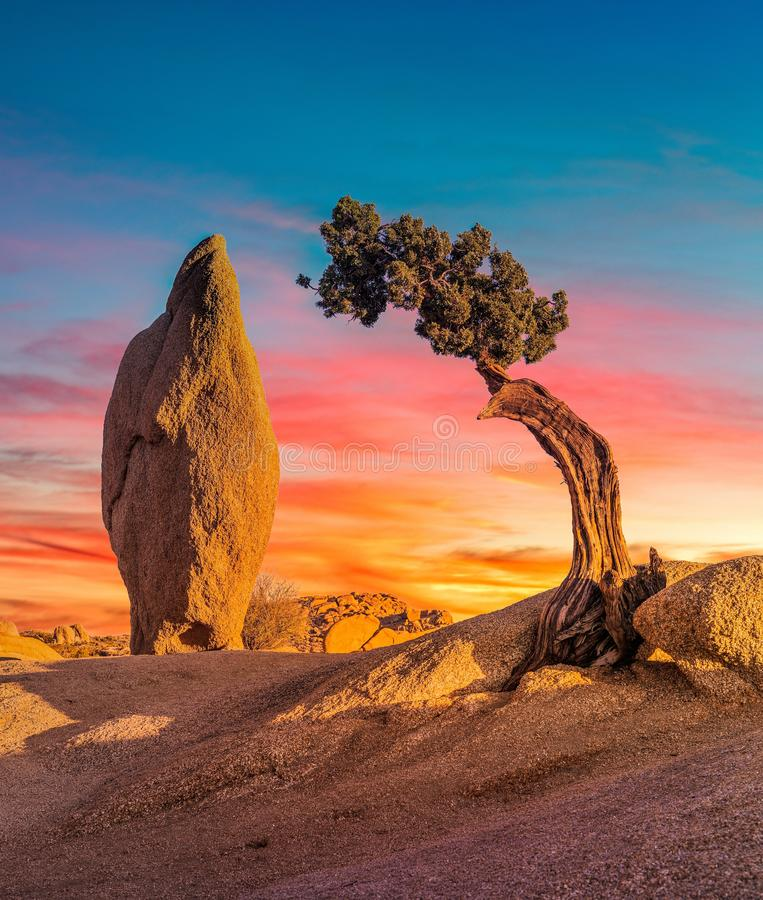 Vertical shot of a boulder rock and an isolated sabal palmetto tree under the colorful sky. A vertical shot of a boulder rock and an isolated sabal palmetto tree royalty free stock photos