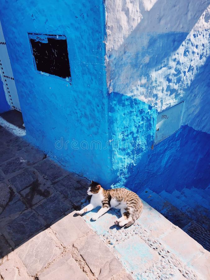 Vertical shot  of a cat laying near stairs and a blue wall on a sunny day. A vertical shot  of a cat laying near stairs and a blue wall on a sunny day royalty free stock photo