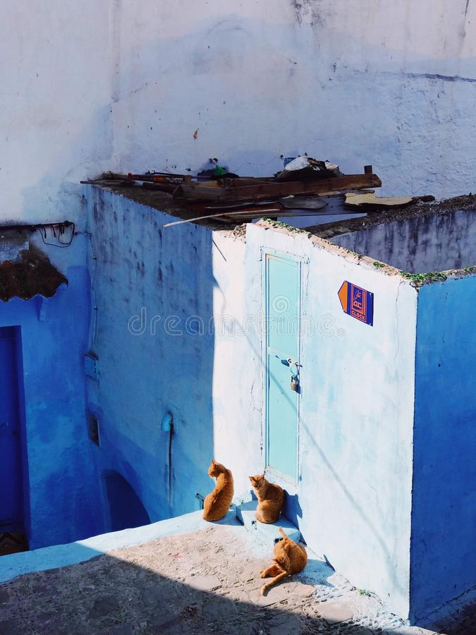Vertical shot of cats sitting near a blue wall and a blue door on a sunny day. A vertical shot of cats sitting near a blue wall and a blue door on a sunny day royalty free stock photo