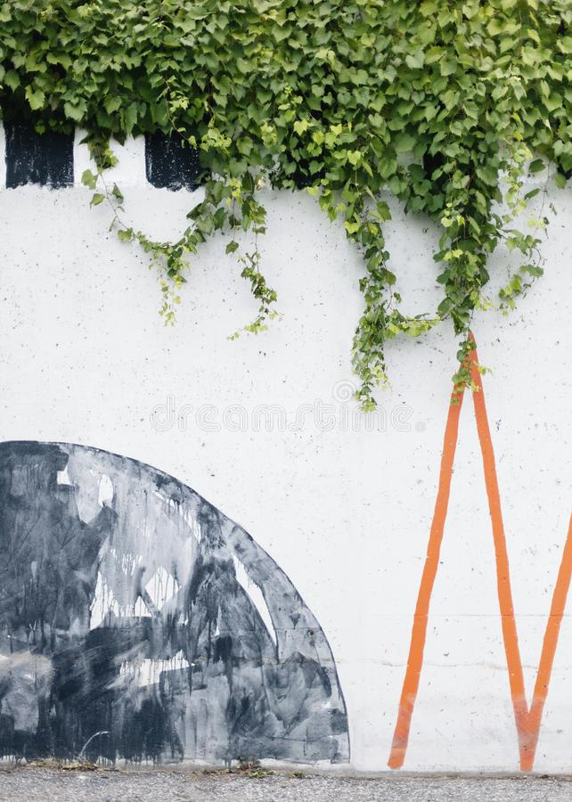 Vertical shot of climber plants on a white wall with drawings. A vertical shot of climber plants on a white wall with drawings royalty free stock photos