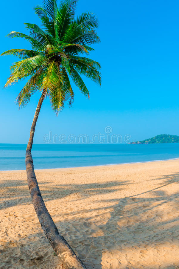 Vertical shot curved coconut palm stock photo