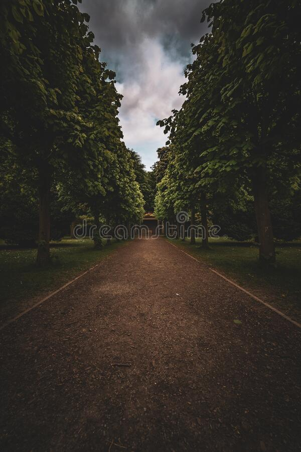 Tree Lined Road Black White Landscape Photos Free Royalty Free Stock Photos From Dreamstime