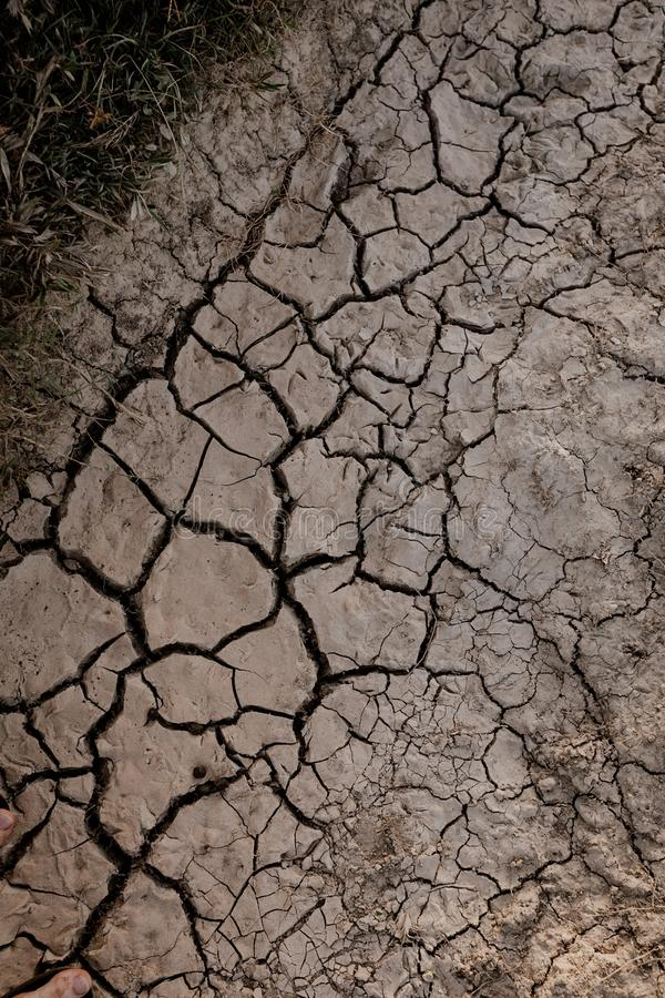 Vertical shot of a dry cracked mudy ground near plants. A vertical shot of a dry cracked muddy ground near plants royalty free stock images