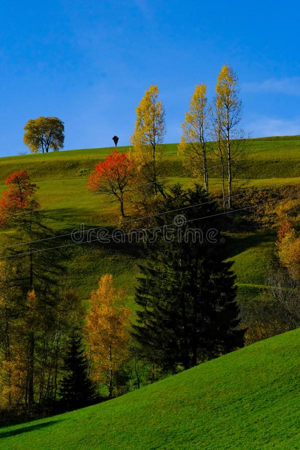 Vertical shot of a grassy field with red and yellow trees and a blue sky in the background. A vertical shot of a grassy field with red and yellow trees and a stock photo
