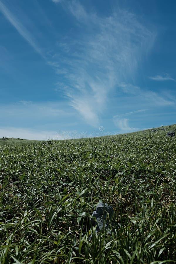 Vertical shot of a green grass field under a blue sky. A vertical shot of a green grass field under a blue sky stock image