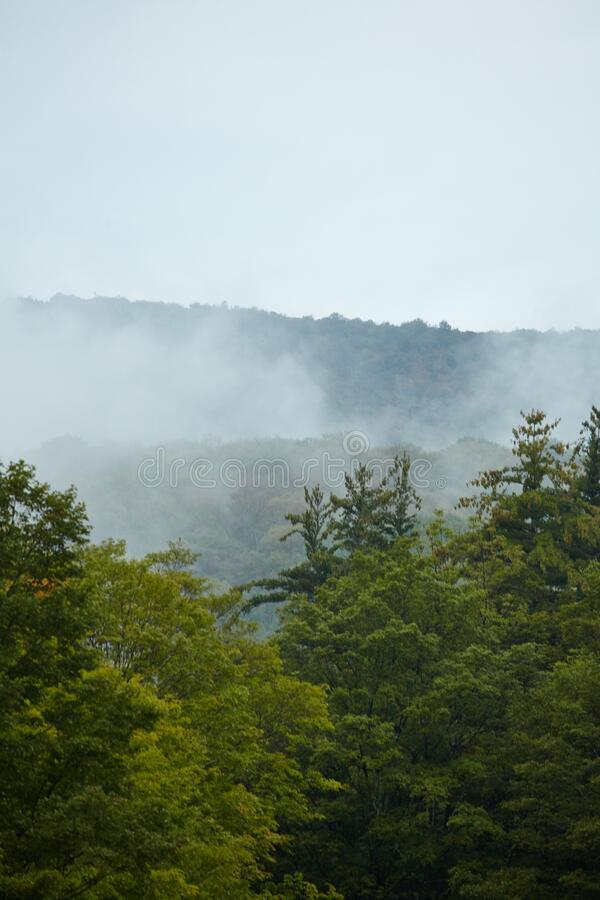 Vertical shot of the Green Mountain Forest  covered in fog in Vermont. A vertical shot of the Green Mountain Forest  covered in fog in Vermont stock photography