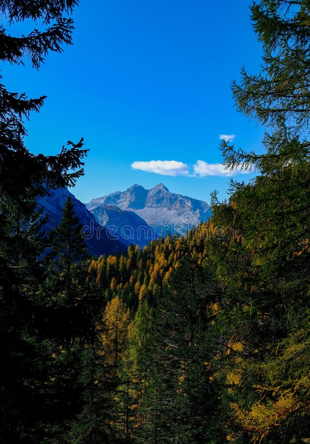Vertical shot of green and yellow leaf trees and a mountain in the distance with blue sky. A vertical shot of green and yellow leaf trees and a mountain in the royalty free stock image
