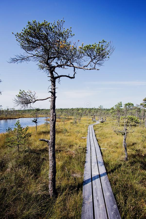Vertical shot of a narrow wooden road on the lakeside near trees and grass. A vertical shot of a narrow wooden road on the lakeside near trees and grass stock photography