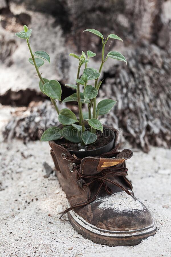 Vertical shot of an old boot with the plant royalty free stock photos