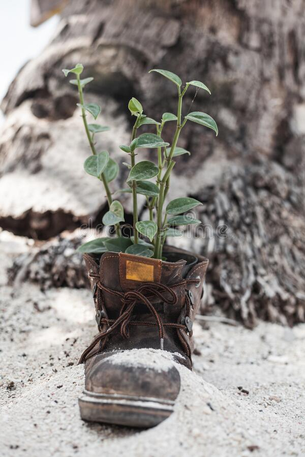 Vertical shot of an old boot with the plant stock photos
