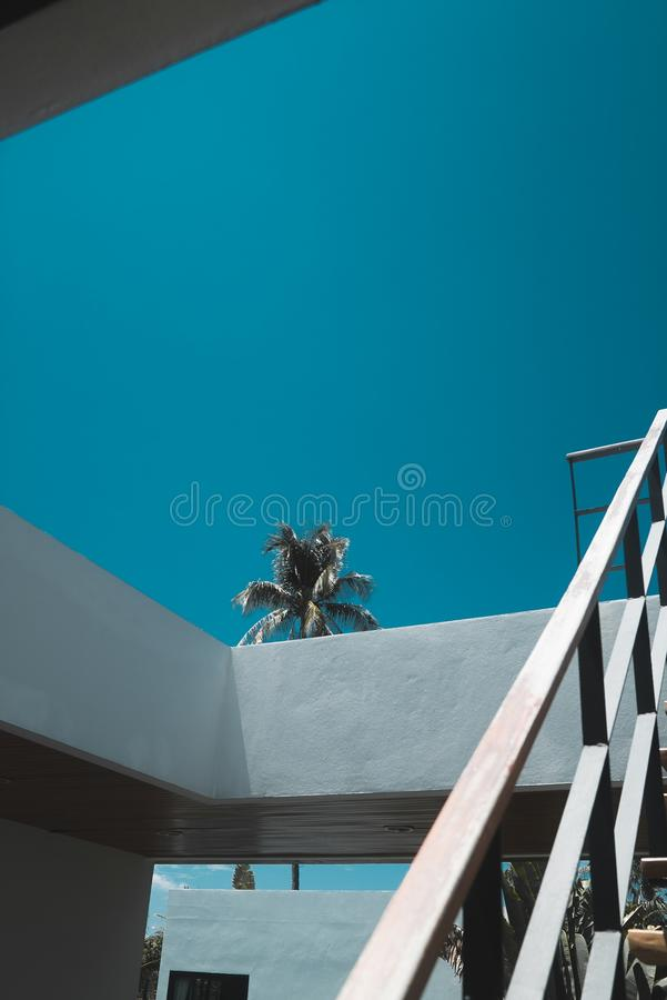 Vertical shot of a palm tree near gray stairs under a clear blue sky during daytime stock photos