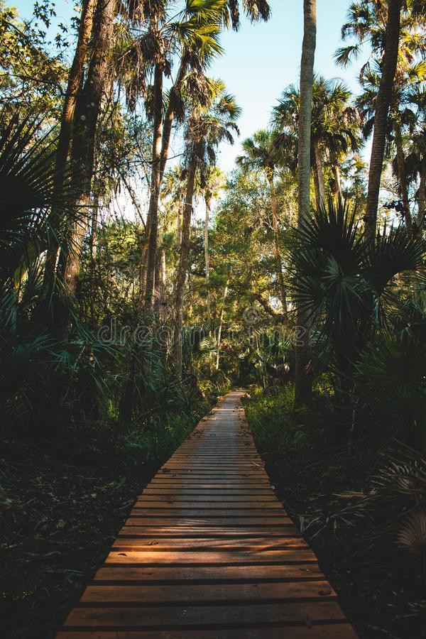 Vertical shot of a pathway made of wooden boards surrounded with tropical plants and trees. A vertical shot of a pathway made of wooden boards surrounded with royalty free stock photography