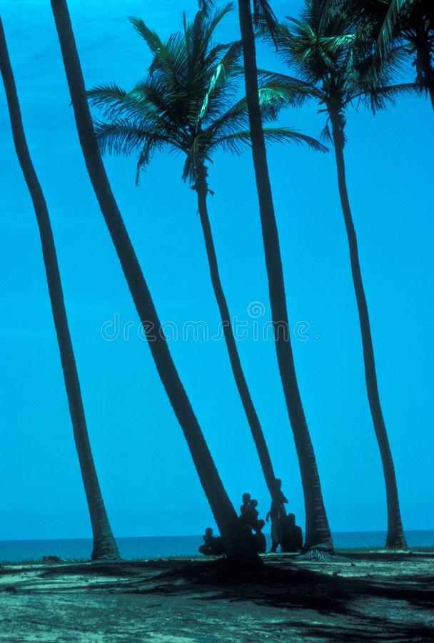 Vertical shot of people near palm trees and the Benin beach with a blue sky in the background stock images