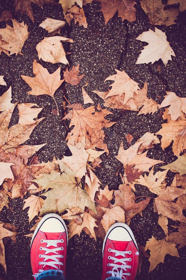 Vertical shot of a person with red shoes standing near brown leaves. A vertical shot of a person with red shoes standing near brown leaves royalty free stock photos
