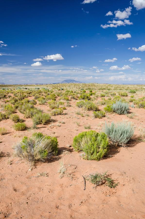 Vertical shot of scenic red desert with green bushes stock photography