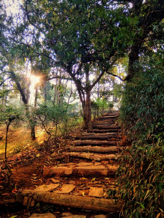 Vertical shot of a staircase up to the hill in the middle of trees. A vertical shot of a staircase up to the hill in the middle of trees royalty free stock photos