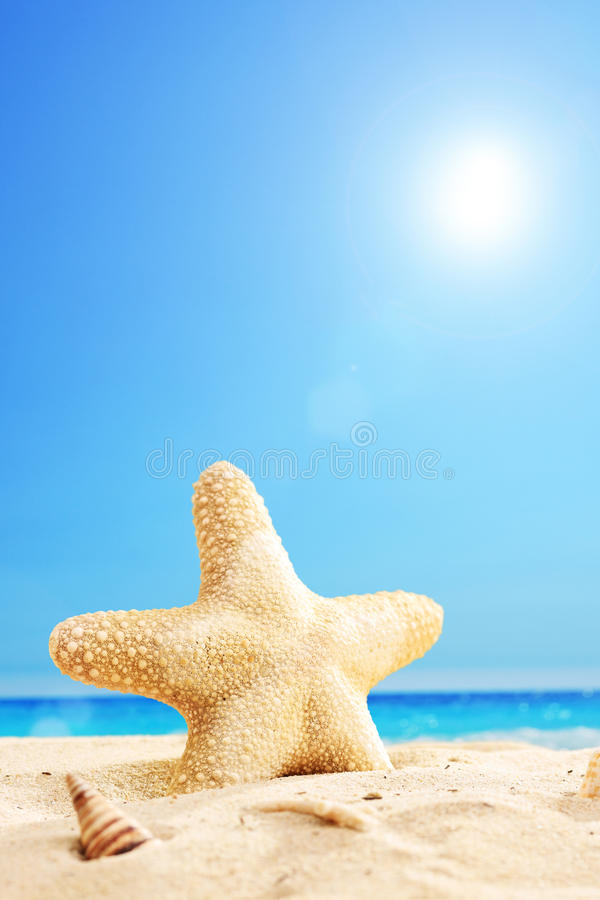 Vertical shot of a starfish on a beach. Vertical shot of a starfish on a sunny beach royalty free stock image