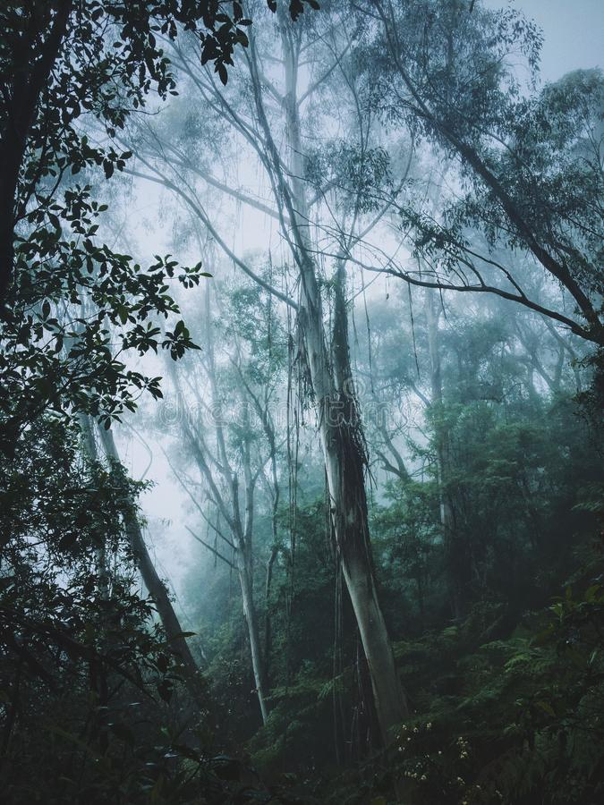Vertical shot of tall trees and plants on a hill in a fog stock image