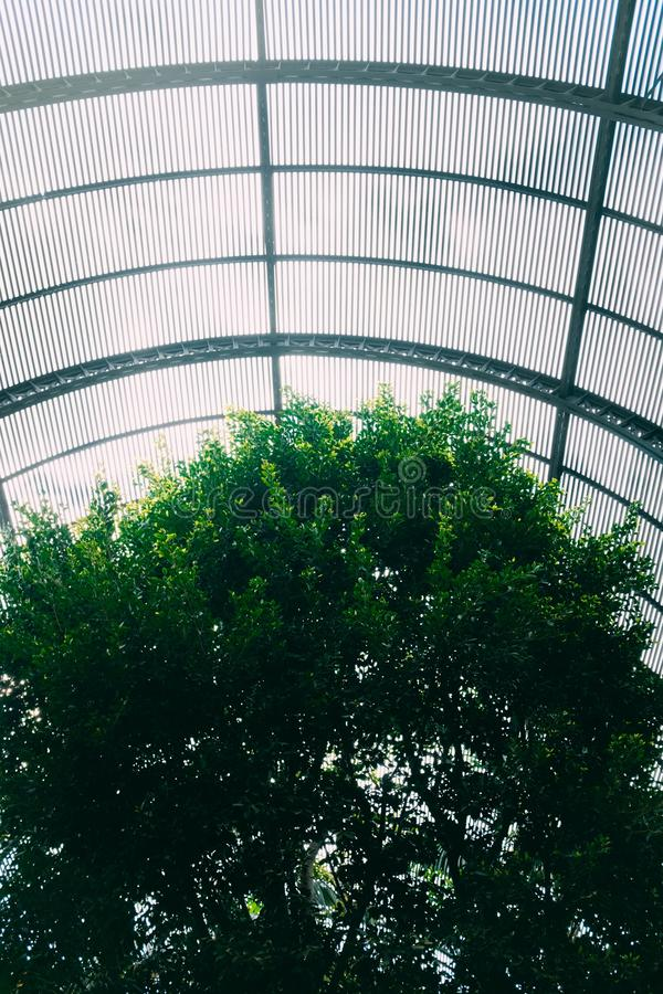Vertical shot of a tree in a botanical garden with a fenced ceiling. A vertical shot of a tree in a botanical garden with a fenced ceiling royalty free stock images