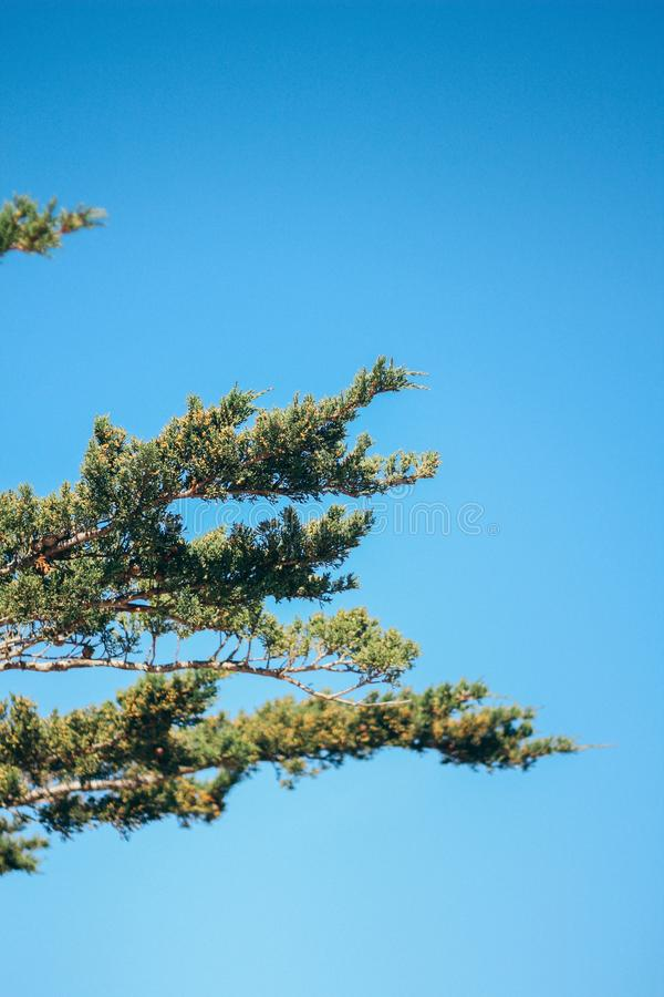 Vertical shot of tree branches from the side with a clear blue sky in the background royalty free stock photography