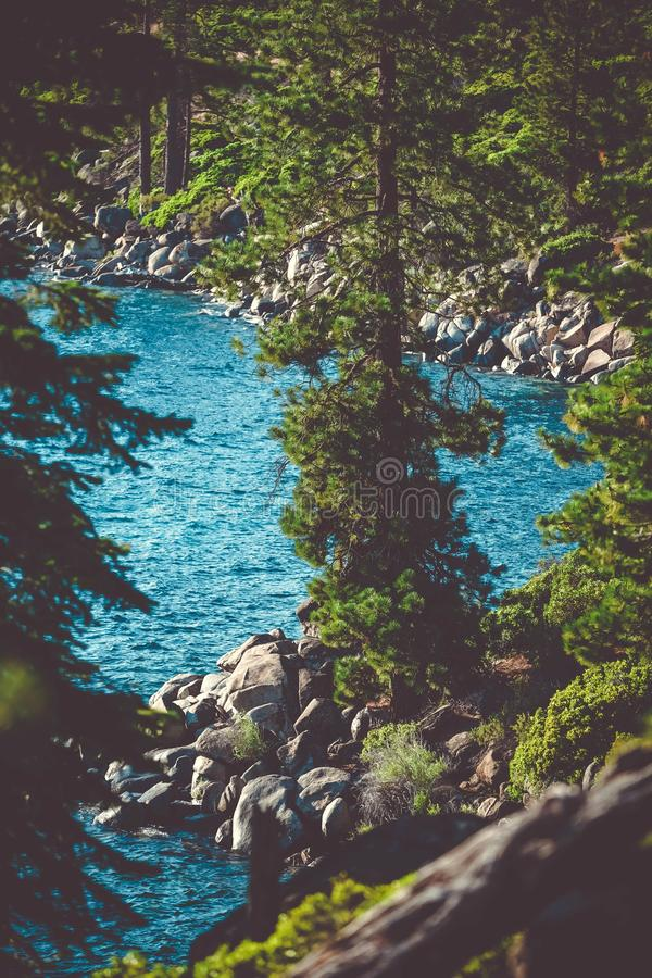 Vertical shot of tree on a rocky shore near the South Lake Tahoe, CA on a sunny day royalty free stock photos