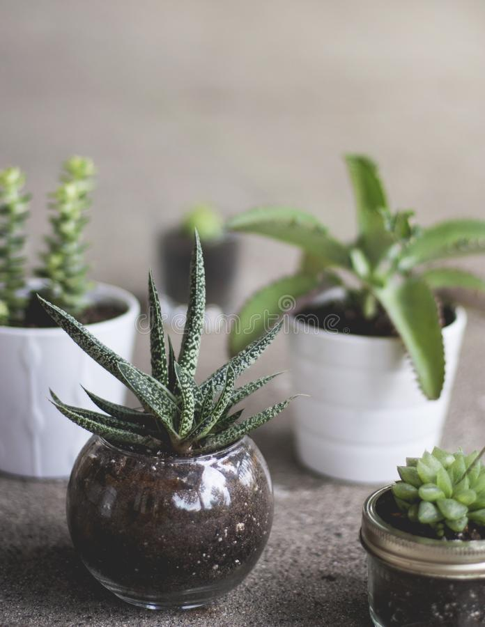 Vertical shot of various plants in different pots stock photo