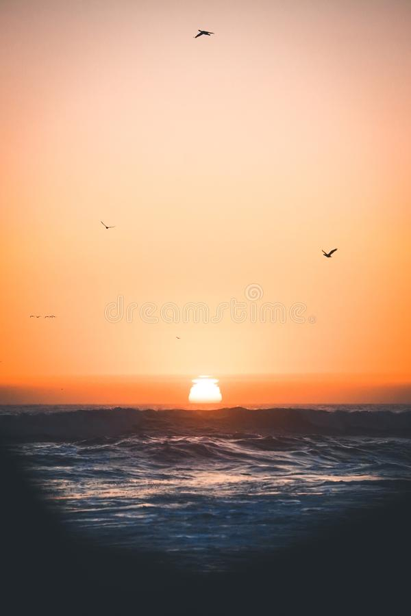 Vertical shot of waves of the ocean and birds flying over it at sunset in Central California Coast stock photos
