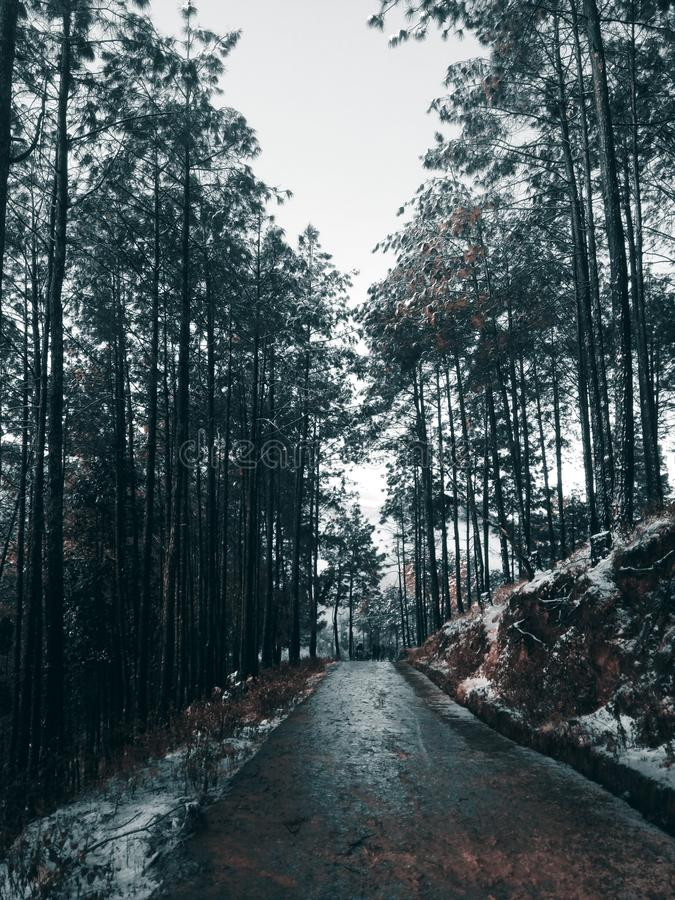 Vertical shot of a wet road in the middle of a forest under a cloudy sky. A vertical shot of a wet road in the middle of a forest under a cloudy sky stock photos