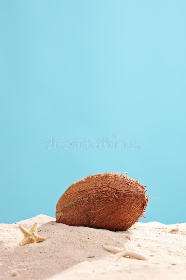 Vertical studio shot of a coconut in sand. On blue background royalty free stock photography
