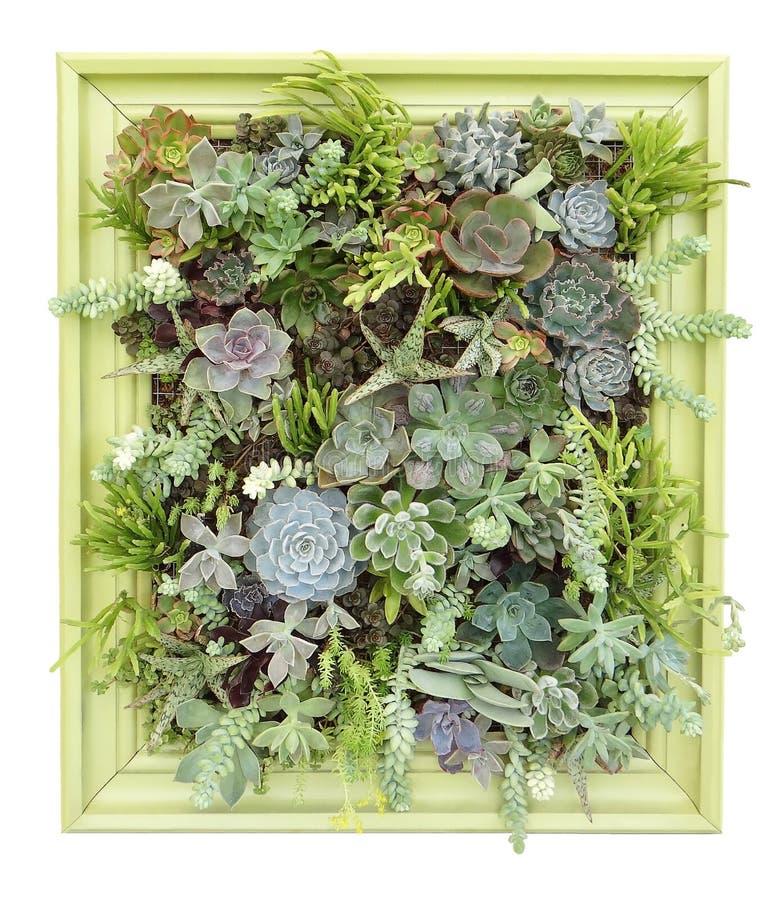 Vertical Succulent Wall Art royalty free stock photos