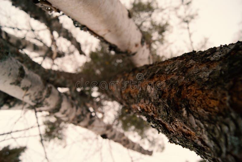 Vertical Trees Free Public Domain Cc0 Image