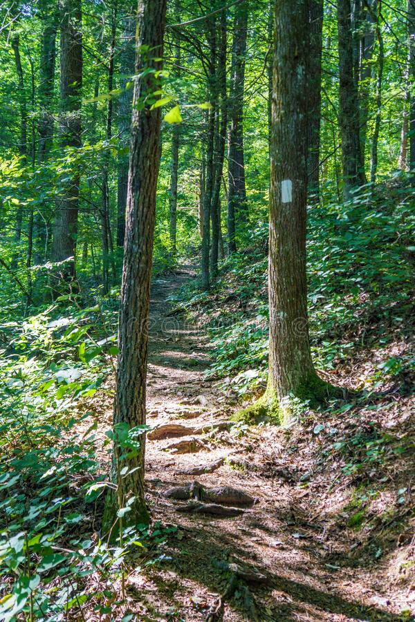 Vertical View of the Appalachian Trail in the Blue Ridge Mountains. Vertical view of the Appalachian Trail located in the Blue Ridge Mountains of Virginia, USA stock image