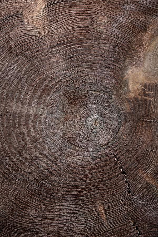 Vertical view cross cut vintage wood texture of tree trunk stock photo