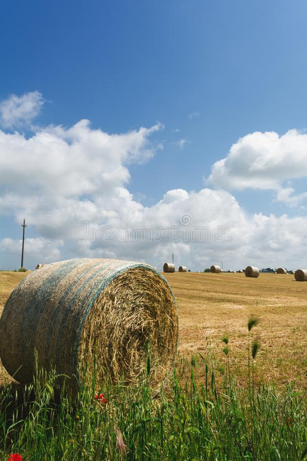 Vertical View of a Grain Field with some Bales of Hay on Partially Cloudy Blue Sky Background. San Basilio, South of Italy royalty free stock images