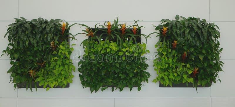 Vertical wall garden or wall arrangement stock images
