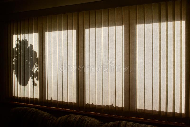 Vertical window blinds texture angle view with a silhouette of a hanging plant stock photos