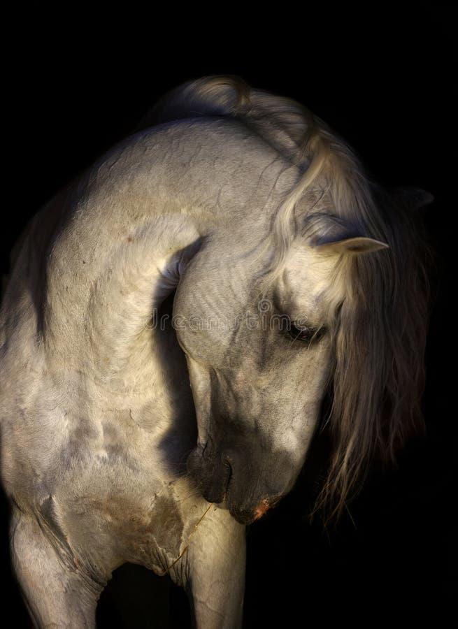 Verticale andalouse de cheval photographie stock