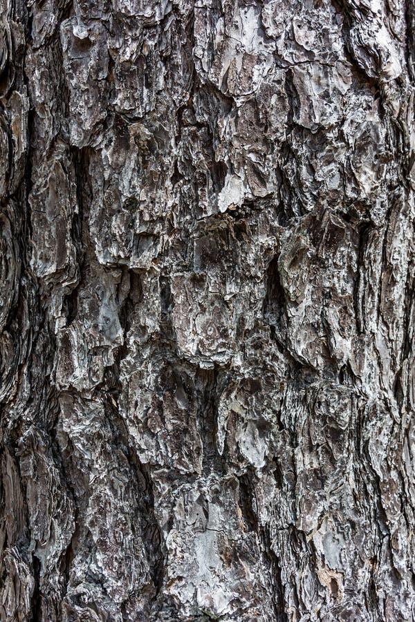 Verticale arrière de pin photo libre de droits