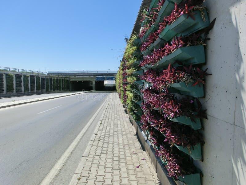 Verticale bloembedden voor installaties op de muur door de weg stock afbeeldingen