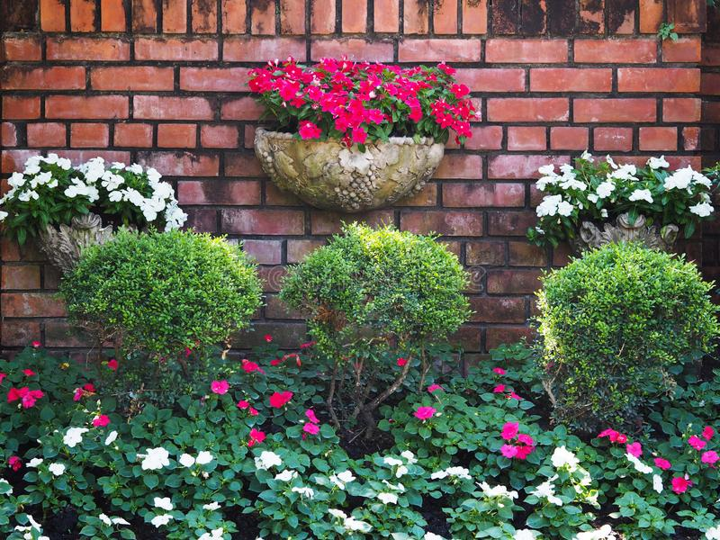 Verticale d'annata dell'albero e del fiore che fa il giardinaggio sul vecchio fondo del muro di mattoni fotografie stock