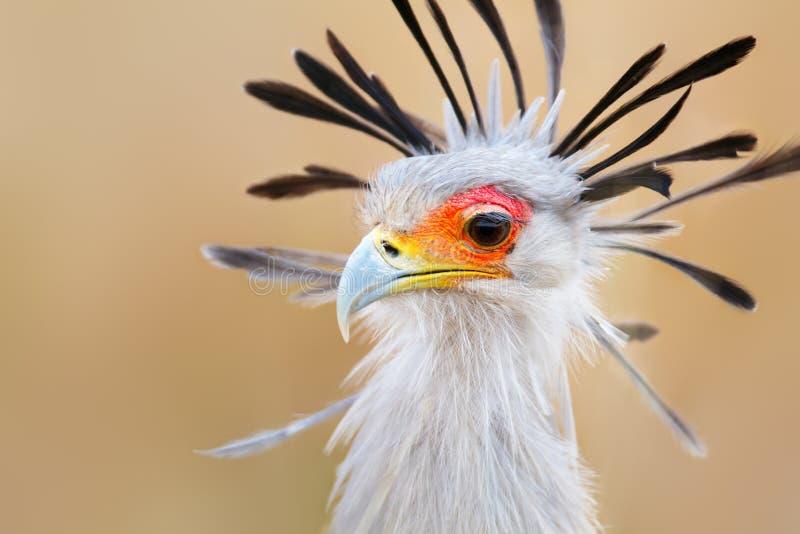 Verticale d'oiseau de secrétaire photo stock
